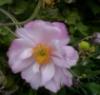 linabella userpic