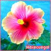 hibiscusgal userpic