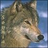Sophia - wolf