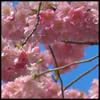 dravensrain userpic