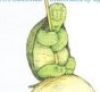 turtle_time userpic