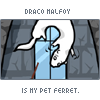 Draco ferret