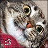 Cat - :3