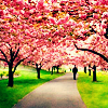 spring road; pink