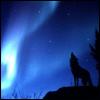 wolf lights
