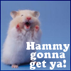 [hamster] Hammy gonna get you!