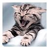 kitten - hello world