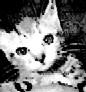 kittiekorn userpic