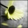 arithna userpic