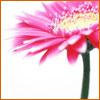alittlepiggy userpic