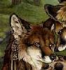worried foxy
