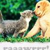 panda-rose: adorable raaawr