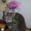 lunaflower