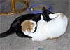 Robyn B.: kitty fight