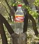 Кока-кола на пне.