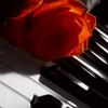 роза на пианино