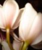 sunnyflou userpic