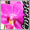sista_diss userpic