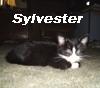 sylvester baby