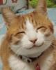 Carol Bartholomew: Happy Cat