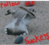 jackpinewarbler