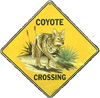 Cyrano: Coyote Xing