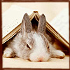 lynney userpic