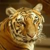milfordcat userpic