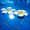 glimglamoury: plumeria in pool