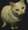 krystalsound userpic