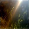 Azaria Flametayl! [userpic]