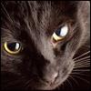 Generally Mischief: kittylurve