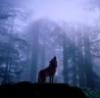 esprit_wolf userpic