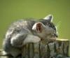 Carol Bartholomew: Kitten on block