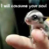 Consume your soul