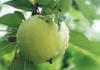 Яблоко - 1 штука