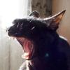 kosta_kosta: кот рычит