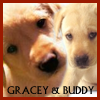 gracebuddy