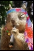 belka_hippy userpic