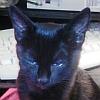 Pandora: Catty Eyebrow