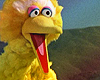 MV: Muppets - Big Bird OMG