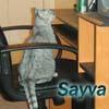 homer_n_sayva userpic