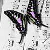 muzikanka userpic