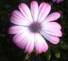 imabellpepper userpic