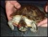 stinky_turtle userpic