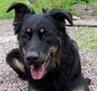 doglets userpic