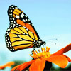 mariposa078