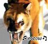 Sabre-Meow!