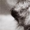 fotolisa userpic