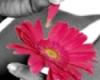 pinksarah22 userpic